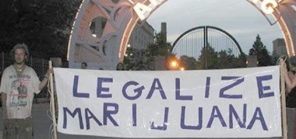 Legalizarea marijuanei, decisa de politicieni