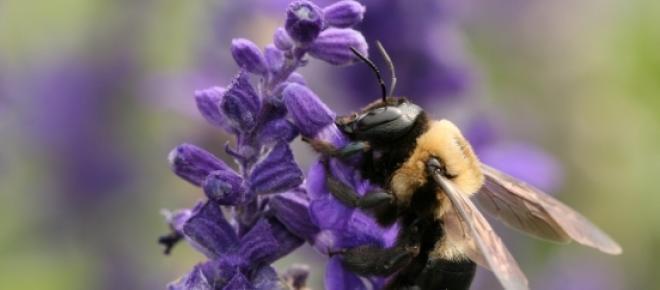 albine pesticide polenizare