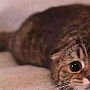 Egy megriadt házi cica a kanapén.