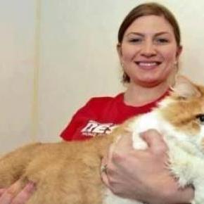 Macskák esetében is bevezetik a súlyadót