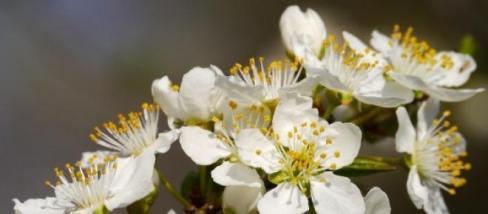 A tavaszi virágok frissessége