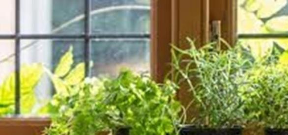 Zöldfűszerek konyhánkban és ételeinkben