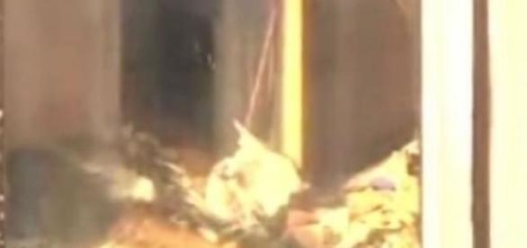 Femeie de 90 de ani, mumificata, in gunoi