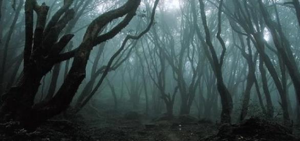 A Kolozsvár melletti Hója-erdő