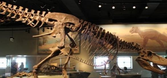 Egy kifejlett Daspletosurus is hatalmas volt