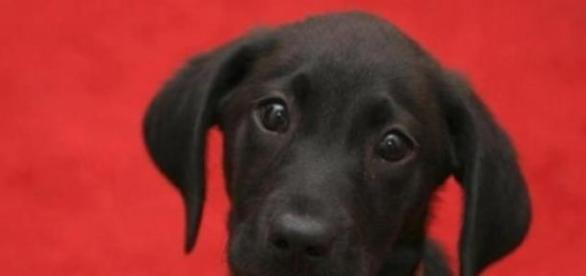 Fekete kutyák örökbefogadása