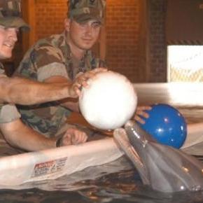Fegyvereket őriznek a játékos delfinek