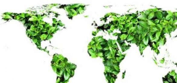 Faltan políticas para cuidar el madioambiente