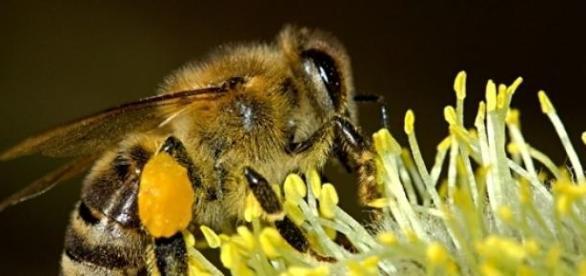 Méhecske munkában (forrás: pixabay.com)