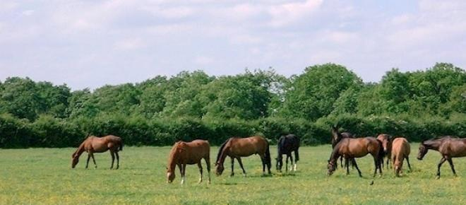 Maica Domnului a blestemat caii pentru că i-au mâncat fânul ce îl acoperea pe Pruncul Iisus.