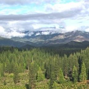 Ezentúl drónok segíthetik az erdő újratelepítését