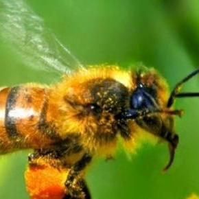 Les apiculteurs ont perdu 40% de leur colonie.