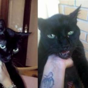 Diana com a gata Lara, que ficou muito maltratada