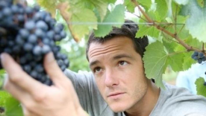 Lavoro maggio 2015, Svizzera assume contadini agricoli. Stipendio: 3000 euro al mese