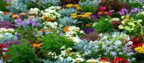 forrás:pixabay.com, kertészkedés