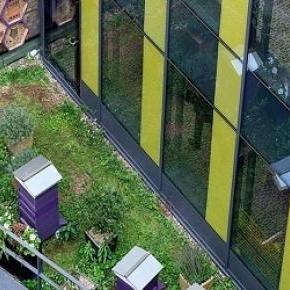 Méh kaptárak a St Ermins Hotel tetején, Londonban