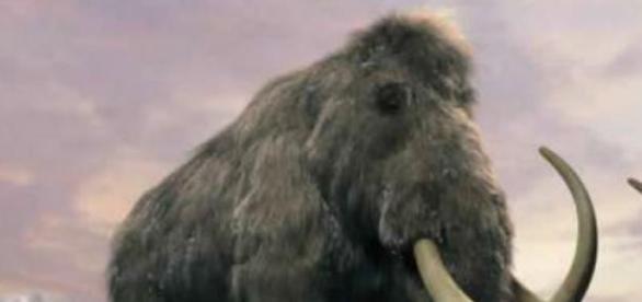 Eran grandes animales prehistóricos