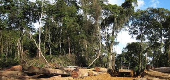 Úton a megoldás a kivágott fák pótlására.