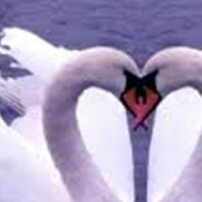 A szerelem a legszebb dolog a világon