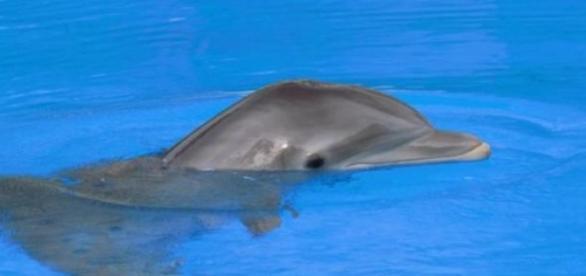 Lo delfines exhiben una gran sociabilidad