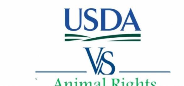 USDA vs. Animal Rights Movement