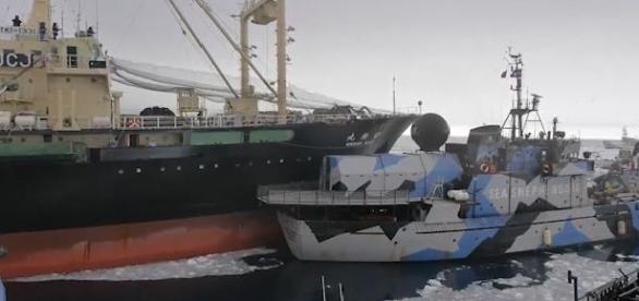 Sea Shepherd collides with JICR Research Vessel
