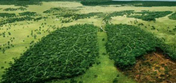 Леса - лёгкие планеты. Берегите их