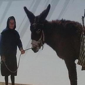 Toscani transformou burros em top models