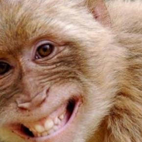 Turistă hărțuită sexual de maimuțe