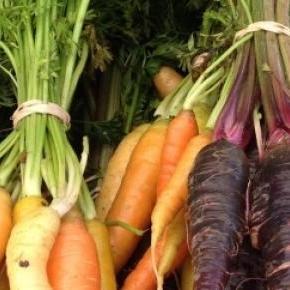 Różnokolorowe odmiany marchewki