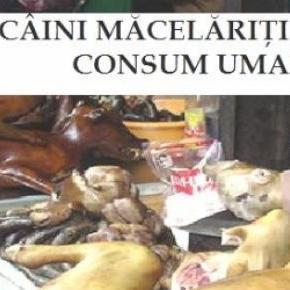 Se vrea stoparea uciderii câinilor pentru consum