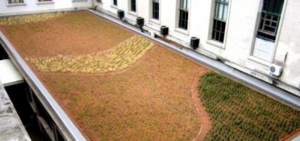Techo verde en la Facultad de Derecho de la UBA