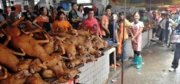 Festivalul Carnii de Caine de la Yulin