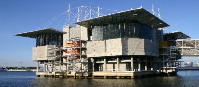 Oceanário de Lisboa encontra-se no auge dos seus lucros.