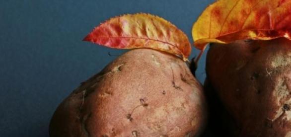 Natürlicher Gentransfer in der Süßkartoffel