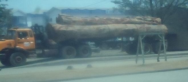 Un camion transportant plusieurs billes de bois.