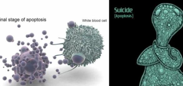 Registran la muerte de una célula humana