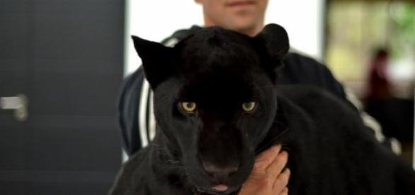 Cielo es la jaguar que incentivo la fundación