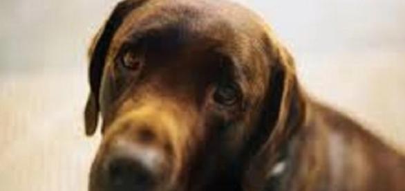 L'expression d'un chien ne trompe pas !