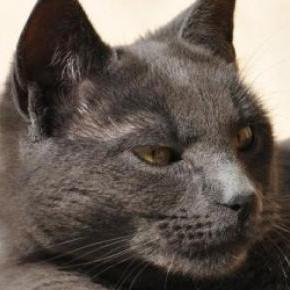 pisica unui cuplu american a devenit agresivă