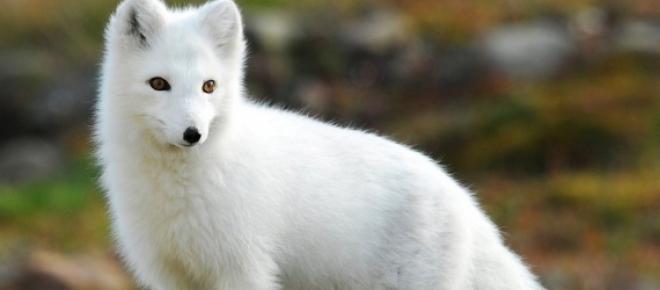 Raposa Branca - O rei D. Manuel I, numa das suas caçadas viu uma raposa branca que tentou caçar, mas sem sucesso.