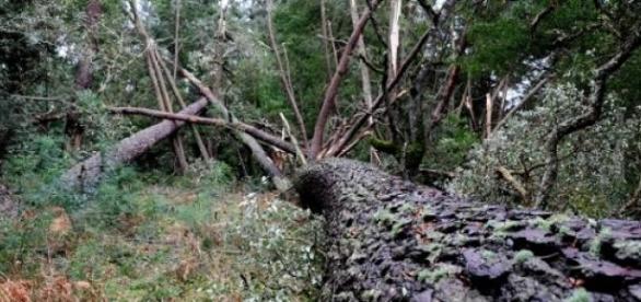Homem morreu esmagado por uma árvore.