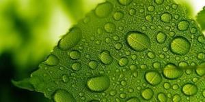 волшебные растения способны на многое
