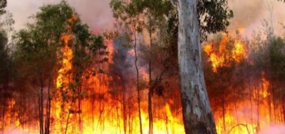 Imagen de archivo de un incendio