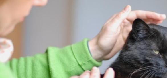 Os gatos são mais sensíveis à energia Reiki