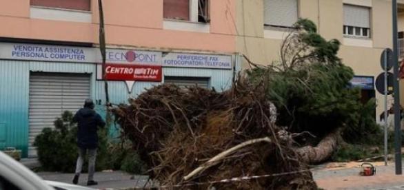 O furtuna violenta a lovut nordul Italiei