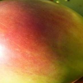 Jabłko dobre na każdą dietę