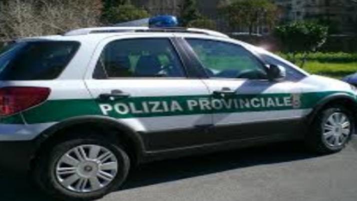 Province, Polizia Provinciale e Centri per l'Impiego: mobilità per quelli in esubero?