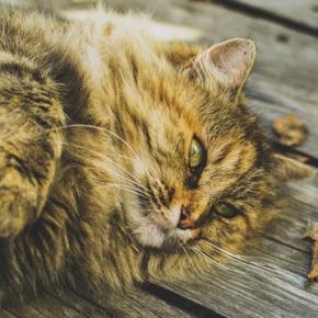 """Na """"koty wychodzące"""" czeka wiele zagrożeń."""