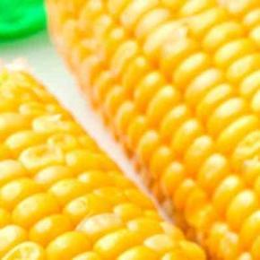 GMO kukorica? Foto forrása: www.zoldvalasz.hu